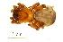 (Ctenizidae - BIOUG00198-D04)  @13 [ ] Copyright  G. Blagoev 2010 Unspecified