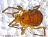 (Triaenonychidae - UAM:Ento:231670)  @13 [ ] CreativeCommons - Attribution Non-Commercial No Derivatives (2013) Derek Sikes University of Alaska Museum
