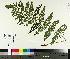 ( - TJD-485)  @11 [ ] by-nc (2014) MTMG McGill University Herbarium