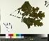 ( - TJD-180)  @11 [ ] by-nc (2014) MTMG McGill University Herbarium