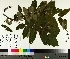 ( - TJD-183)  @11 [ ] by-nc (2014) MTMG McGill University Herbarium