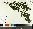 ( - TJD-268)  @11 [ ] by-nc (2014) MTMG McGill University Herbarium
