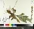( - TJD-281)  @11 [ ] by-nc (2014) MTMG McGill University Herbarium