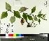 ( - TJD-418)  @11 [ ] by-nc (2014) MTMG McGill University Herbarium