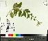 ( - TJD-420)  @11 [ ] by-nc (2014) MTMG McGill University Herbarium