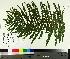 ( - TJD-498)  @11 [ ] by-nc (2014) MTMG McGill University Herbarium