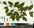 ( - TJD-452)  @11 [ ] by-nc (2014) MTMG McGill University Herbarium