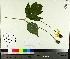 ( - TJD-649)  @11 [ ] by-nc (2014) MTMG McGill University Herbarium