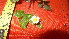 (Fragaria vesca ssp americana - TJD-001)  @11 [ ] CreativeCommons - Attribution Non-Commercial (2013) MTMG McGill Herbarium