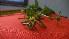 ( - TJD-002)  @11 [ ] CreativeCommons - Attribution Non-Commercial (2013) MTMG McGill Herbarium
