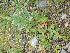 ( - TJD-281)  @11 [ ] CreativeCommons - Attribution Non-Commercial (2013) MTMG McGill Herbarium