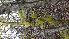 ( - TJD-007)  @11 [ ] CreativeCommons - Attribution Non-Commercial (2013) MTMG McGill Herbarium