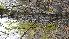 (Populus balsamifera - TJD-007)  @11 [ ] CreativeCommons - Attribution Non-Commercial (2013) MTMG McGill Herbarium
