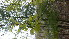 ( - TJD-008)  @11 [ ] CreativeCommons - Attribution Non-Commercial (2013) MTMG McGill Herbarium