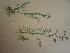 (Cardamine parviflora - TJD-544)  @11 [ ] CreativeCommons - Attribution Non-Commercial (2013) MTMG McGill University Herbarium