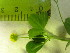 (Medicago - TJD-587)  @11 [ ] CreativeCommons - Attribution Non-Commercial (2013) MTMG McGill University Herbarium