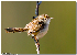 (Prinia - MP4422)  @11 [ ] Unspecified (default): All Rights Reserved  Unspecified Unspecified