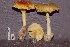  (Amanita aff. hemibapha - TRTC157250)  @11 [ ] CreativeCommons - Attribution Non-Commercial Share-Alike (2010) Unspecified Royal Ontario Museum