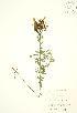 ( - KSR 011WP)  @11 [ ] CreativeCommons – Attribution Share-Alike (by-sa) (2012) University of Guelph OAC BIO Herbarium
