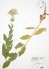 ( - JAG 0618WP)  @11 [ ] CreativeCommons – Attribution Share-Alike (by-sa) (2012) University of Guelph OAC BIO Herbarium