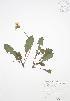 ( - RBG 133WP)  @11 [ ] CreativeCommons – Attribution Share-Alike (by-sa) (2012) University of Guelph OAC BIO Herbarium