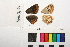 ( - RVcoll.13-S420)  @11 [ ] Butterfly Diversity and Evolution Lab (2014) Roger Vila Institute of Evolutionary Biology