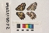 ( - RVcoll.090211SD22)  @11 [ ] Butterfly Diversity and Evolution Lab (2014) Roger Vila Institute of Evolutionary Biology