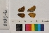 ( - RVcoll.13-S646)  @11 [ ] Butterfly Diversity and Evolution Lab (2014) Roger Vila Institute of Evolutionary Biology
