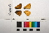 ( - RVcoll.08-L187)  @11 [ ] Butterfly Diversity and Evolution Lab (2014) Roger Vila Institute of Evolutionary Biology