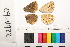 ( - RVcoll.08-P470)  @11 [ ] Butterfly Diversity and Evolution Lab (2014) Roger Vila Institute of Evolutionary Biology