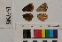 ( - RVcoll.13-T385)  @11 [ ] Butterfly Diversity and Evolution Lab (2014) Roger Vila Institute of Evolutionary Biology
