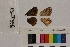 ( - RVcoll.13-T396)  @11 [ ] Butterfly Diversity and Evolution Lab (2014) Roger Vila Institute of Evolutionary Biology