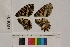 ( - RVcoll.13-U557)  @11 [ ] Butterfly Diversity and Evolution Lab (2014) Roger Vila Institute of Evolutionary Biology