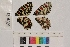 ( - RVcoll.13-U559)  @11 [ ] Butterfly Diversity and Evolution Lab (2014) Roger Vila Institute of Evolutionary Biology