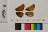 ( - RVcoll.14-A332)  @11 [ ] Butterfly Diversity and Evolution Lab (2014) Roger Vila Institute of Evolutionary Biology
