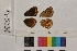 ( - RVcoll.14-B231)  @11 [ ] Butterfly Diversity and Evolution Lab (2014) Roger Vila Institute of Evolutionary Biology