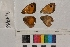 ( - RVcoll.14-B416)  @11 [ ] Butterfly Diversity and Evolution Lab (2014) Roger Vila Institute of Evolutionary Biology