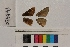 ( - RVcoll.14-B420)  @11 [ ] Butterfly Diversity and Evolution Lab (2014) Roger Vila Institute of Evolutionary Biology