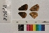( - RVcoll.14-B448)  @11 [ ] Butterfly Diversity and Evolution Lab (2014) Roger Vila Institute of Evolutionary Biology