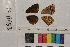 ( - RVcoll.14-B453)  @11 [ ] Butterfly Diversity and Evolution Lab (2014) Roger Vila Institute of Evolutionary Biology