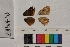 ( - RVcoll.14-B487)  @11 [ ] Butterfly Diversity and Evolution Lab (2014) Roger Vila Institute of Evolutionary Biology