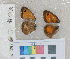 ( - RVcoll.12-Q136)  @11 [ ] Butterfly Diversity and Evolution Lab (2014) Roger Vila Institute of Evolutionary Biology