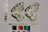 ( - RVcoll.13-T947)  @11 [ ] Butterfly Diversity and Evolution Lab (2014) Roger Vila Institute of Evolutionary Biology