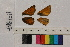 ( - RVcoll.13-T967)  @11 [ ] Butterfly Diversity and Evolution Lab (2014) Roger Vila Institute of Evolutionary Biology