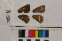 ( - RVcoll.14-A226)  @11 [ ] Butterfly Diversity and Evolution Lab (2014) Roger Vila Institute of Evolutionary Biology