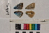 ( - RVcoll.14-A301)  @11 [ ] Butterfly Diversity and Evolution Lab (2014) Roger Vila Institute of Evolutionary Biology