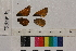 ( - RVcoll.14-A462)  @11 [ ] Butterfly Diversity and Evolution Lab (2014) Roger Vila Institute of Evolutionary Biology