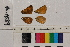( - RVcoll.14-A589)  @11 [ ] Butterfly Diversity and Evolution Lab (2014) Roger Vila Institute of Evolutionary Biology
