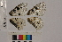 ( - RVcoll.14-A614)  @11 [ ] Butterfly Diversity and Evolution Lab (2014) Roger Vila Institute of Evolutionary Biology