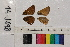 ( - RVcoll.14-J698)  @11 [ ] Butterfly Diversity and Evolution Lab (2014) Roger Vila Institute of Evolutionary Biology